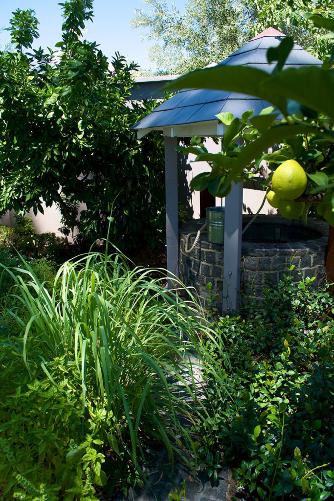 Fruit tree in lush garden