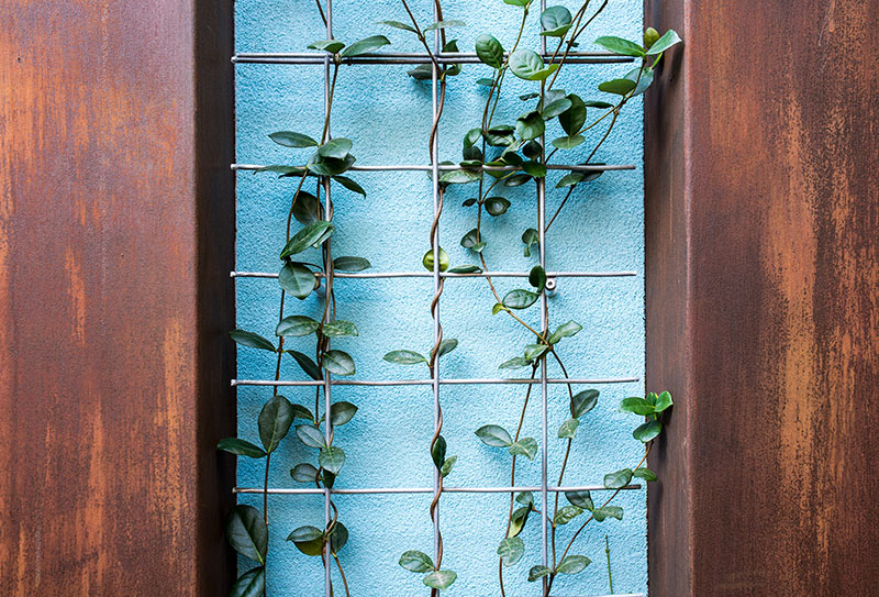 plant climbing up a wall